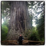 Photo taken at Big Tree by Roger L. on 9/14/2012