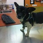 Photo taken at Banfield Pet Hospital by Francesca H. on 2/8/2013