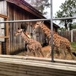 Photo taken at Zoo World by Brady C. on 1/15/2013