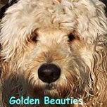 Photo taken at Golden Beauties Driven to Doodles LLC by Golden Beauties Driven to Doodles LLC on 10/17/2014