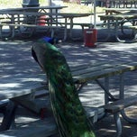 Photo taken at Tradewinds Park - Elfin Shelter by Cucina A. on 6/16/2012