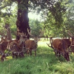 Photo taken at Richmond Park by Howard K. on 7/21/2013