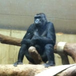 Photo taken at Great Ape House at the National Zoo by Shannon B. on 4/18/2013