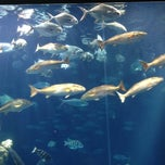 Photo taken at Charleston Aquairum by Julia Z. on 6/26/2012
