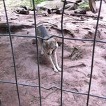 Photo taken at Wolf sanctuary by Flippie D. on 9/4/2011