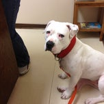 Photo taken at Ritchey Moore Vet Clinic by Jason G. on 2/20/2012