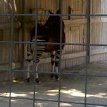 Photo taken at Okapi Exhibit by Jeff R. on 5/6/2011