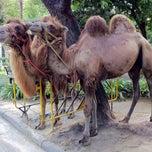 Photo taken at สวนสัตว์ดุสิต (Dusit Zoo) by Thavatchai T. on 8/13/2011