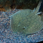 Photo taken at The Living Planet Aquarium by Thomas K. on 5/27/2012
