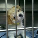 Photo taken at Southeast Area Animal Control Authority by Flower H. on 12/24/2011