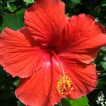 Photo taken at Botanical Conservatory by Mary on 8/8/2012