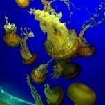 Photo taken at Oregon Coast Aquarium by Elaine N. on 10/8/2011