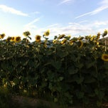Photo taken at Pieve di San Casciano by Angela S. on 7/22/2012