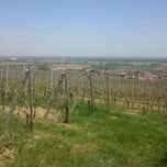 Photo taken at Pfaffenheim Vineyards by Etienne W. on 4/28/2012
