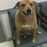Photo taken at Critter Care Animal Hospital by Julie B. on 8/31/2012