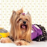 Photo taken at Dogs & Cats Professional Grooming by Yorkie G. on 6/17/2012