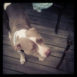 Photo taken at Frederick County Animal Shelter by Jenni C. on 9/1/2012