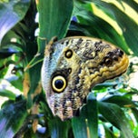 Photo taken at The Academy of Natural Sciences of Drexel University by Jen L. on 7/26/2012