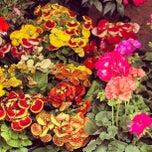 Foto tomada en Mercado de Plantas y Flores  Madreselva por Ivan S. el 3/4/2012