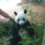 Photo taken at Zoo Atlanta by Claire B. on 7/23/2012