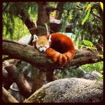 Photo taken at Sacramento Zoo by Lenka V. on 4/18/2012
