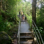 Photo taken at Akaka Falls State Park by Drew T. on 7/25/2012
