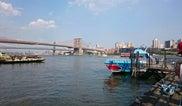 Shark Speedboat