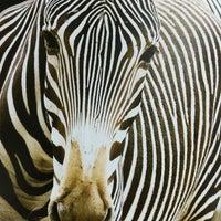 Photo taken at Saint Louis Zoo by James V. on 7/3/2012