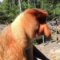 Photo taken at Labuk Bay Proboscis Monkey Sanctuary by Alexey E. on 1/4/2014