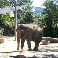 Photo taken at Cincinnati Zoo & Botanical Garden by Derek J. on 9/16/2012