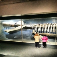 Photo taken at Harvard Museum of Natural History by Kelvin M. on 12/28/2012