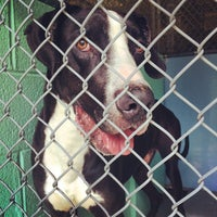 Photo taken at Guilford County Animal Shelter by Morgan V. on 4/4/2014