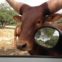 Photo taken at Natural Bridge Wildlife Ranch by Sasha F. on 7/26/2013