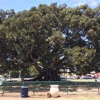 Photo taken at Moreton Bay Fig Tree by Kate H. on 5/9/2014