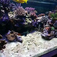 Photo taken at Aquarium City by Dennis C. on 3/23/2014