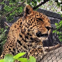 Photo taken at San Diego Zoo by Ramy R. on 6/1/2013