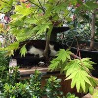 Photo taken at Flowercraft Garden Center by Suraj A. on 6/28/2015