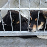 Photo taken at Pasadena Humane Society & SPCA by Yvo on 2/22/2013