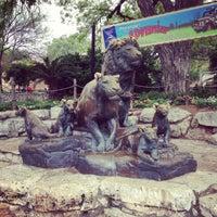 Photo taken at San Antonio Zoo by Daniel R. on 4/14/2013