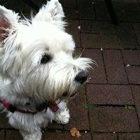 Photo taken at White Dog Cafe by Susan O. on 7/1/2013