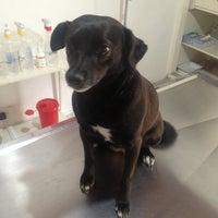 Photo taken at Clinica Veterinaria Animal Care by sebax v. on 2/10/2013