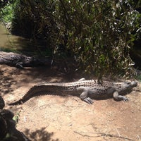 Photo taken at Crocodile Sanctuary by mahsa p. on 3/27/2016