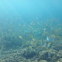 Photo taken at Dive-central Jolly Rojer by Valentina S. on 2/19/2014
