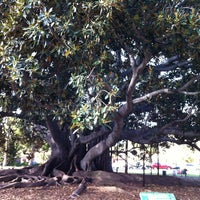 Photo taken at Moreton Bay Fig Tree by Rachelle W. on 3/22/2014