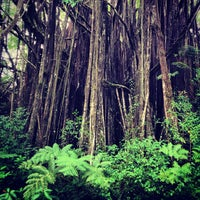 Photo taken at Akaka Falls State Park by Peter V. on 12/4/2012