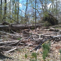 Photo taken at Cylburn Arboretum by Adrian G. on 4/13/2013