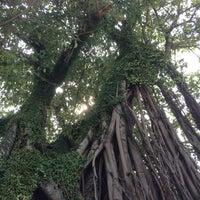 Photo taken at Phi Phi Banyan Villas by iRita F. on 1/7/2013