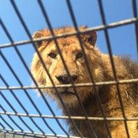 Photo taken at Parque Safari by Seba on 7/11/2013