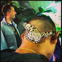 Photo taken at The Butterfly Conservatory at the American Museum of Natural History by Aliza on 5/12/2013