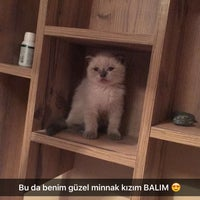 Photo taken at Veteriner BBC by Pınar S. on 7/27/2016